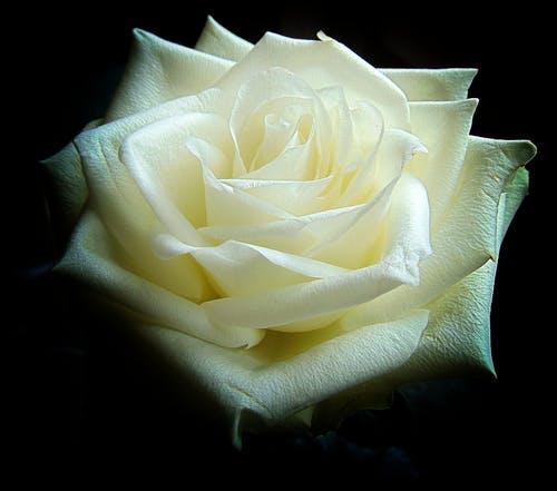 Kdo je »duhovno« oziroma osebnostno razvit in kdo ni?